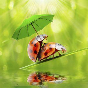 ladybug sex